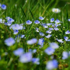 Comment stopper toute invasion de la pyrale du buis et garder un jardin vert
