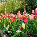 Bordure de jardin : les meilleures plantes à choisir